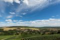 Vignoble_Verneuil